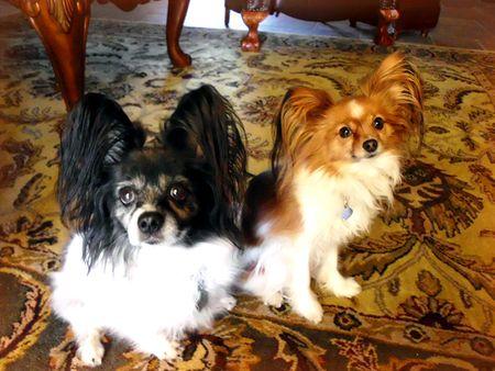 3-7-12 Missy & Cassie