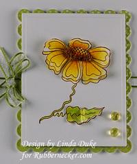 Little_flower_close_up
